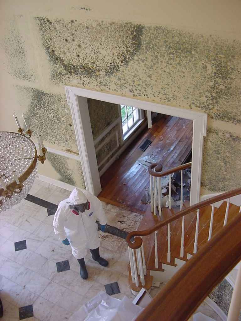 Mold Cleanup in Irvine, CA (7728)
